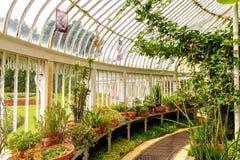 Botanic Gardens Belfast. BELFAST, NI - JULY 14, 2016: Greenhouse in the Botanic Gardens Belfast. The gardens are opened in 1828 royalty free stock photo
