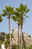 Belfry behind Palm Trees Royalty Free Stock Image