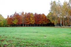 België, Bastogne, Vredespark De heldere oranje herfst Stock Afbeelding