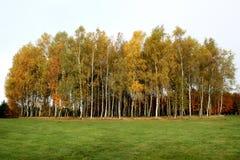 België, Bastogne, Vredespark De heldere oranje herfst Stock Foto's