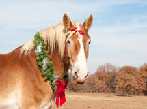 Belgian Draft horse with a Christmas wreath royalty free stock photos
