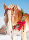 Belgian draft horse with a Christmas wreath. Closeup of a Belgian draft horse with a Christmas wreath and a bow in his mane in snowy winter landscape Stock Photos