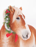 Belgian draft horse with a Christmas wreath Stock Photography