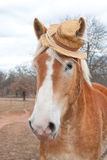 Belgian Draft horse wearing a straw hat Royalty Free Stock Images