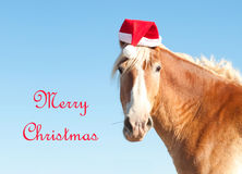 Belgian Draft horse wishing Merry Christmas royalty free stock image