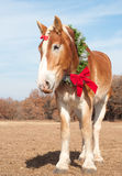 Belgian Draft horse with a wreath Royalty Free Stock Photo
