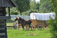 Belgian Draft Team on Covered Wagon Royalty Free Stock Photo