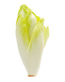 Belgian Endive Stock Photography