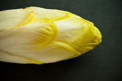 Belgian endive Stock Images
