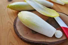 Free Belgian Endive, Chicory Raw Vegetable Or Witloof Stock Photos - 101703313