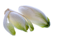 Belgian Endive or Witloof. Two heads of Belgian endive, chicory, witloof, lof or witlof, isolated Royalty Free Stock Image
