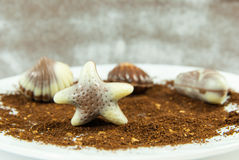 Belgian praline in the form of starfish Royalty Free Stock Image