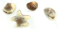 Belgian praline in the form of starfish Stock Photo