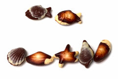 Belgian sea shell chocolates Royalty Free Stock Image