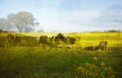 Belgian spring landscape Royalty Free Stock Photos