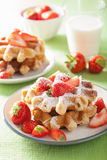 Belgian waffles with icing sugar and strawberry Stock Image