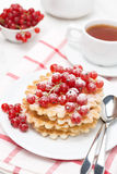 Belgian waffles with red currant, sprinkled with powdered sugar Stock Image