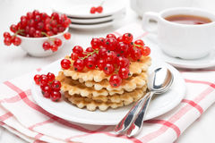 Belgian waffles with red currants on a plate Royalty Free Stock Photos