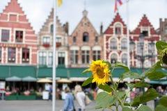 Belgien bruges marknadsfyrkant Royaltyfri Bild