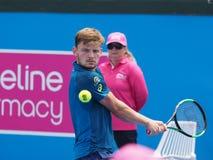 Belgijski gracz w tenisa David Goffin narządzanie dla australianu open przy Kooyong Obrazy Royalty Free