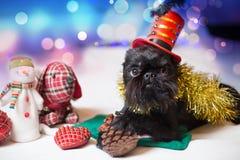 Belgische Griffon in een Kerstmiskostuum Royalty-vrije Stock Foto