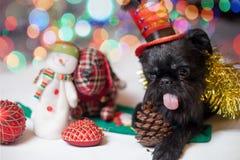 Belgische Griffon in een Kerstmiskostuum Royalty-vrije Stock Afbeelding