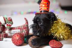 Belgische Griffon in een Kerstmiskostuum Stock Foto's