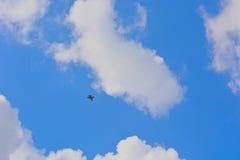 Belgische vechter-Straal hoog in de hemel Stock Foto's