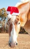 Belgisches Entwurfspferd, das einen Sankt-Hut trägt Stockfotografie