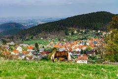 Belgisches Pferd Brabancon auf dem Ackerland, Elsass, Frankreich Stockfotos