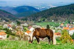 Belgisches Pferd Brabancon auf dem Ackerland, Elsass, Frankreich Lizenzfreie Stockfotos