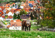 Belgisches Pferd Brabancon auf dem Ackerland, Elsass, Frankreich Lizenzfreie Stockfotografie