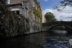 Belgium blooms in spring stock images