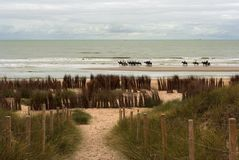 Belgium coast. Horseback riding at the Belgium coast stock photo