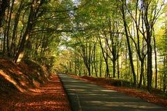 Belgrad Forest Stock Images