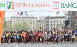 belgrade maraton 2008 fotografering för bildbyråer