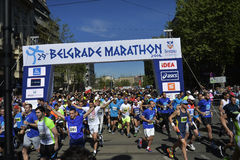 Belgrade maraton, Serbien Royaltyfria Bilder