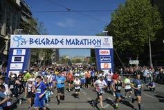 Belgrade maraton, Serbien Arkivbilder