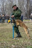 Soldier training dog. BELGRADE, SERBIA - FEBRUARY 13, 2011: Serbian Army soldier training dog at a demonstration exercise on the eve of the Statehood Day royalty free stock photo