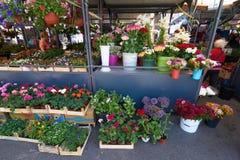 Open air market in Belgrade Stock Photography