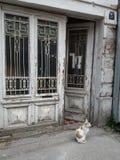 Belgrado - Vozdovac - gatto immagine stock
