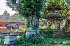 Beli, ołtarzowego i dużego świętego drzewnego pobliskiego balijczyka Hinduska świątynia przy Buruan, Bali, Indonezja obrazy royalty free