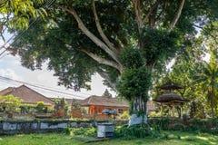 Beli, ołtarzowego i dużego świętego drzewnego pobliskiego balijczyka Hinduska świątynia przy Buruan, Bali, Indonezja zdjęcie stock