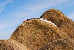 beli pola siana lato kobieta Zdjęcie Stock