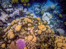 Belice Coral Reef Underwater y pescado Fotos de archivo