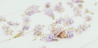 Belichaming van tederheid Uiterst klein tuinslak en decor in de stijl van de Provence royalty-vrije stock foto's