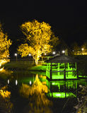Belichtete Bäume und Standpunkt nachts Stockbilder
