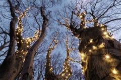 Belichteter Baum Lizenzfreies Stockbild
