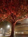 Belichteter Baum lizenzfreie stockfotografie