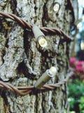 Belichteter Baum Lizenzfreies Stockfoto